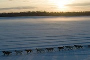 Preview iditarod article