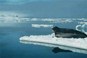 Arctic Ice Loss