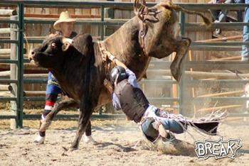 Brutality for Bulls