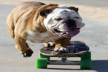Dog Skate Tricks