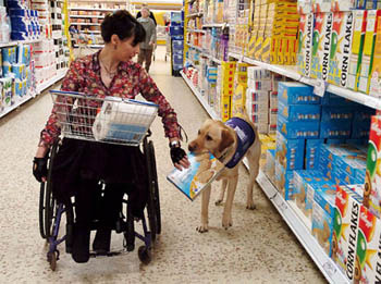 Assistance Dogs Help People In Wheelchairs