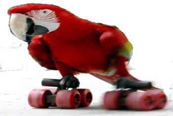 Roller Parrot