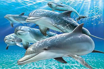 Dolphins are the smartest animals on the planet