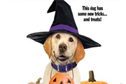 Preview dog who saved halloween preview