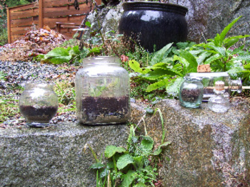 You Can Make a Terrarium in Any Shape Container