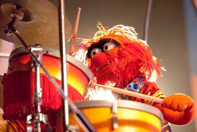 Animal Playing the Drums