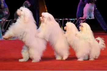 Olate Dogs