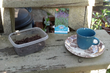 You Will Need Soil, Seeds and a Teacup