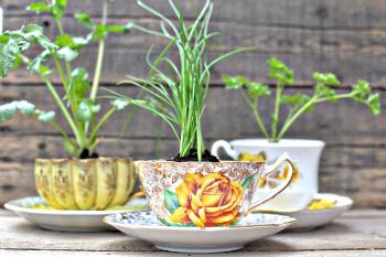 Teacups with Herbs