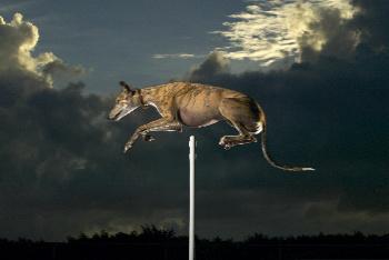 Cinderella May - Highest Jump by a Dog