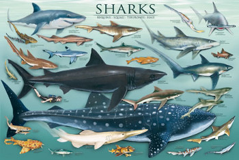 There are over 400 different species of sharks!