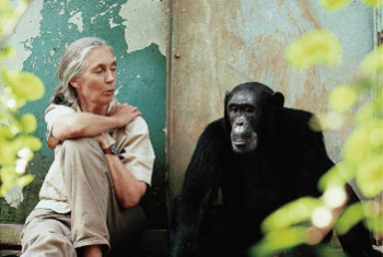Chimps definitely have their own personalities says Mark