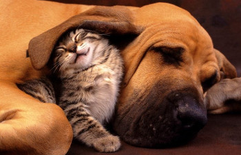 You and your family can share stories of funny moments with your pets