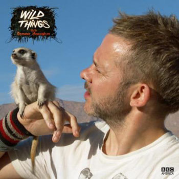 Dom with a Meercat