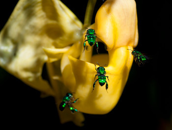 The close-up shots of insects and flowers are so vibrant, it could be CGI!