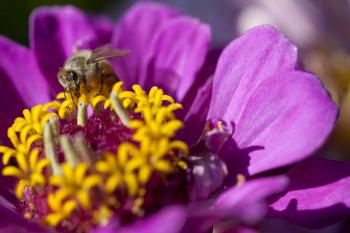 Bees help flowers spread pollen