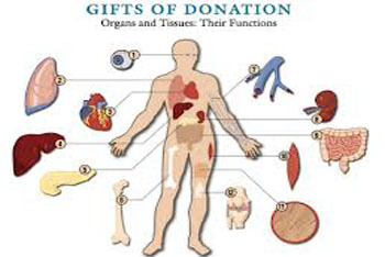 Donateable Organs