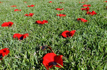 Anzac Day commemorates Australian and New Zealand soldiers
