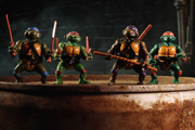 Preview turtles pre