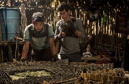 Minho shows Thomas the maze model