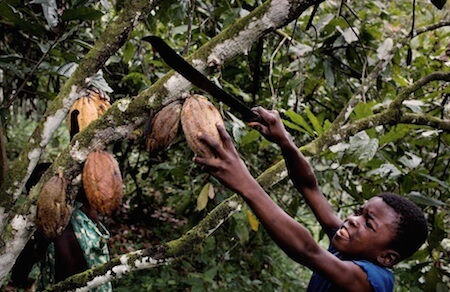 Watch what you eat - child labor is often used on cocoa farms.