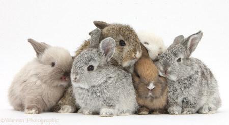 Rabbits live together in underground warrens