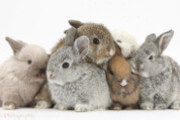Preview rabbits preview