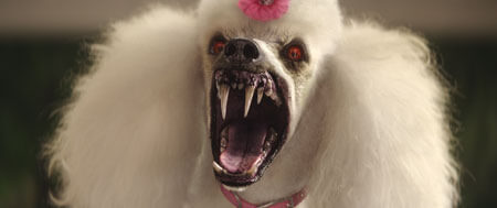 The scary vampire poodle!