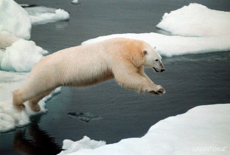 Polar bears are great swimmers