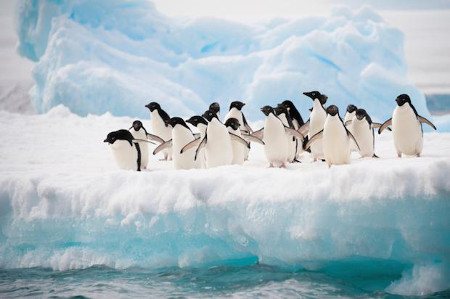 Many penguins live in the Antarctic