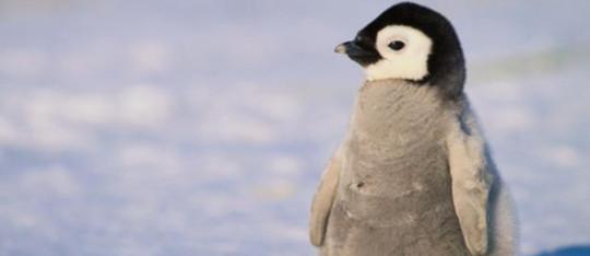 Feature penguin feature