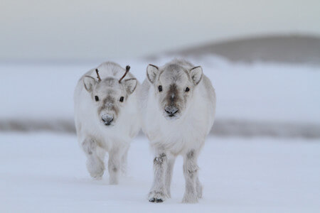 What's better than a baby reindeer? Not much!