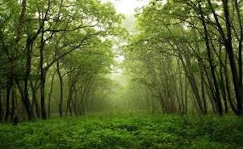 Celebrate by appreciating nature!