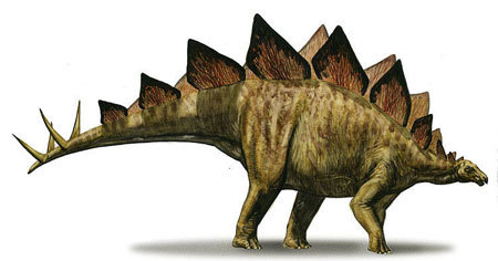 Stegosaurus' Boney Back