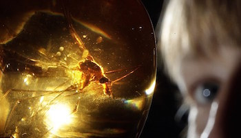 In Jurassic Park, this mosquito provided dinosaur DNA!