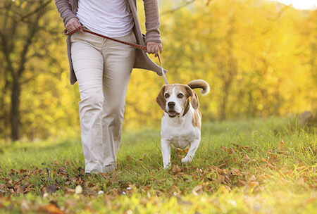 Taking your dog for a walk is great exercise for the both of you!