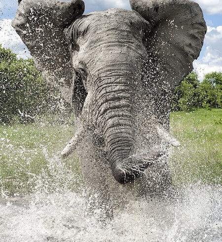 Elephants don't just drink water - they love to play in it too!