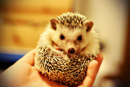 Hedgehogs like to curl up!