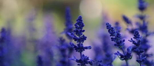 Kidzworld can help you find some medicinal plants in your garden!