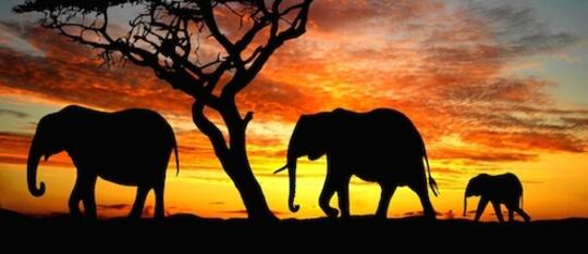 Feature elephants feature