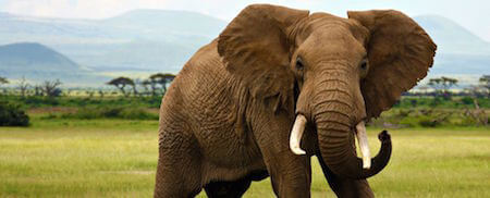 Can you imagine killing this majestic animal just for its tusks? It's a horrifying practice.