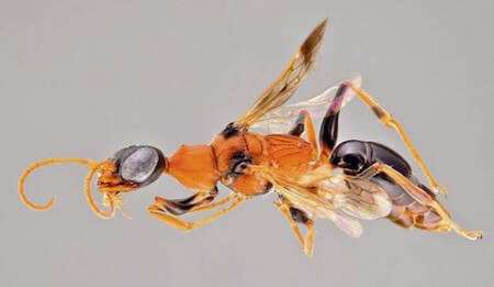 Anyone else find this wasp a little bit scary?