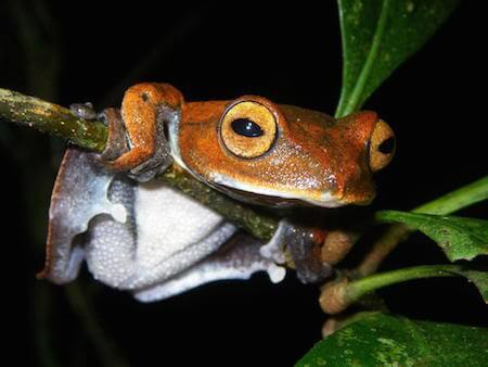 This flying frog is a cutie!