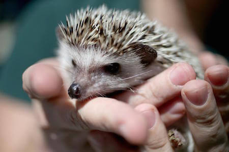 Don't scare the hedgehog - you could get spiked!