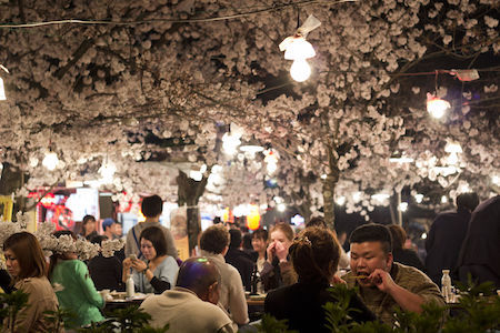 Japanese residents celebrate hanami every spring.