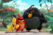 Preview angry birds pre