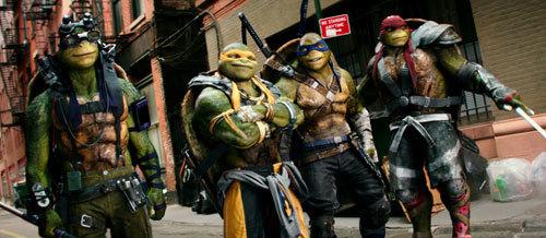 Turtles are amused