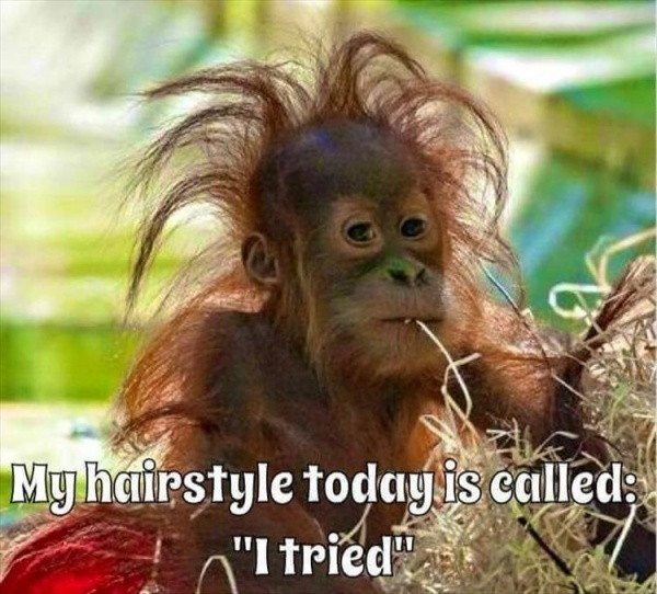If you can control your hair, you have a shot at acing the rest of the day, too!
