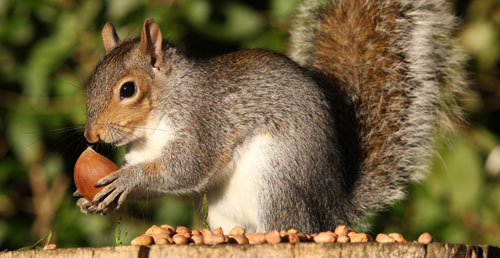 January 21: Squirrel Appreciation Day