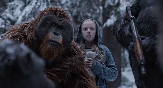 A frightened Nova with orangutan Maurice